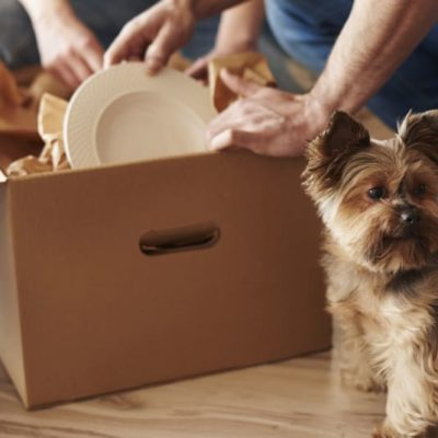 Preparing for Your First Pet? Here's What You Need to Do