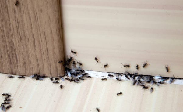 6 Tips For Getting Rid of Ants in Your Home