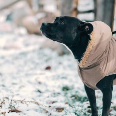 How You Will Know When To Put a Coat On Your Dog.