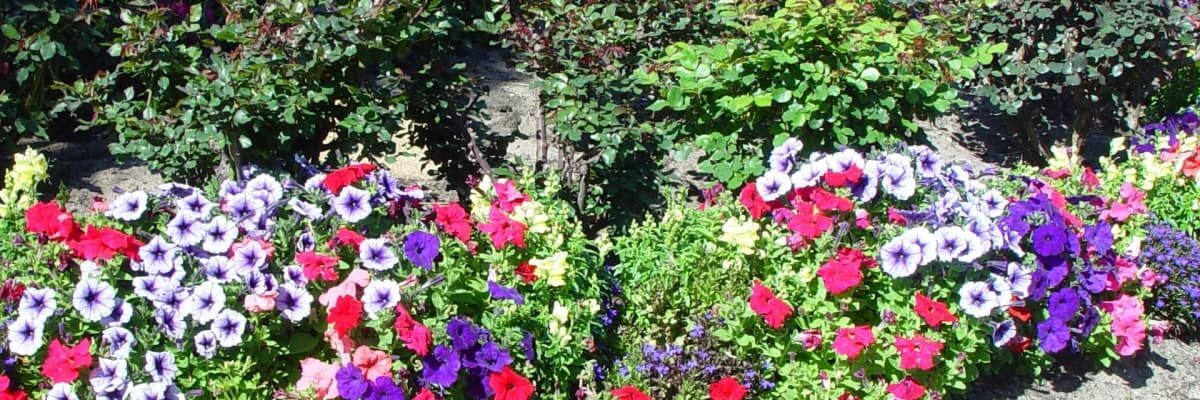 Some Easy To Grow and Maintain Flowers for Your Garden
