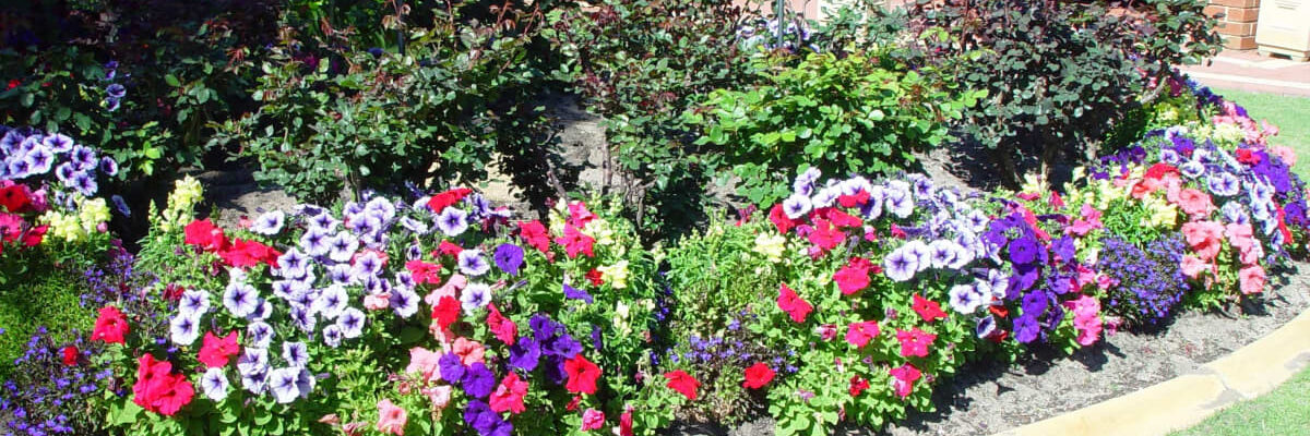 How to Take Care of Your Plants in Your Garden for Beautiful Results