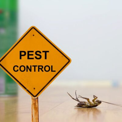Pest Infestation in Austin – How Bad is the Damage?